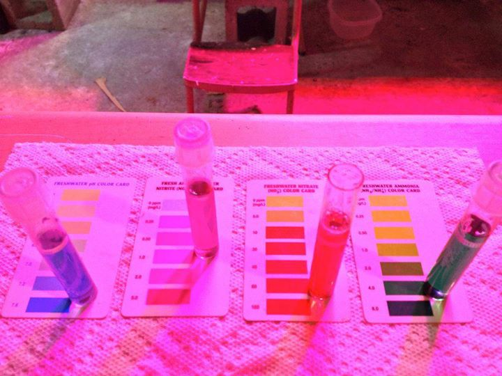 Left to right, pH, Nitrite, Nitrate, Ammonia